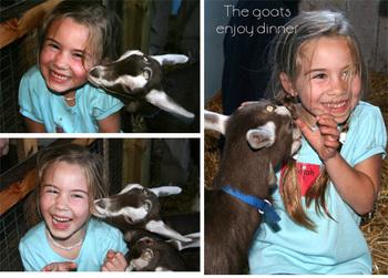 Goat_montage